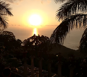 Sunset in the Jungle